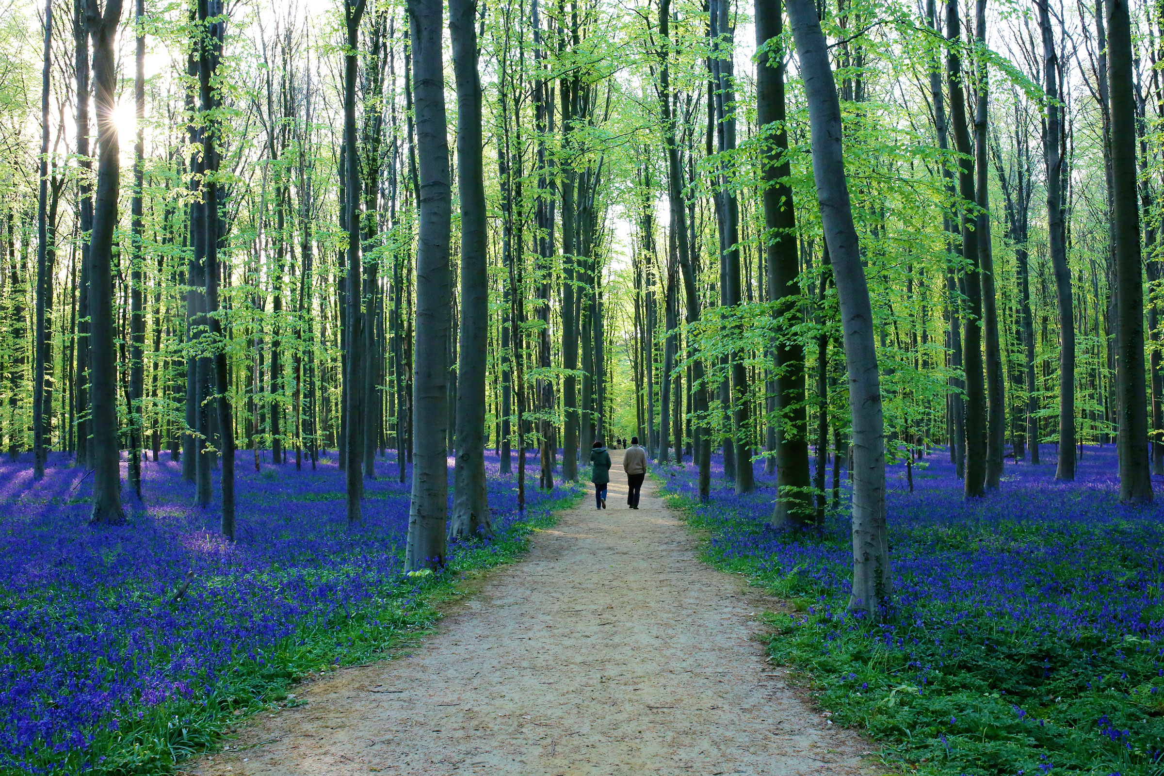 Forest of Halle, Belgium