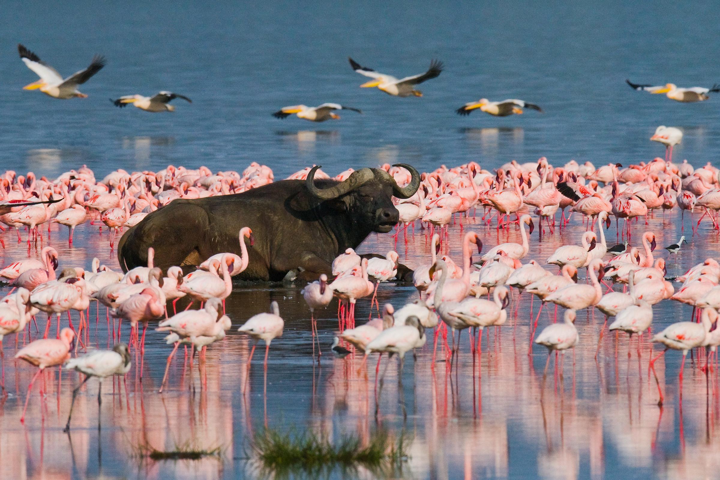 Kenya Nakuru National Park Lake Bogoria