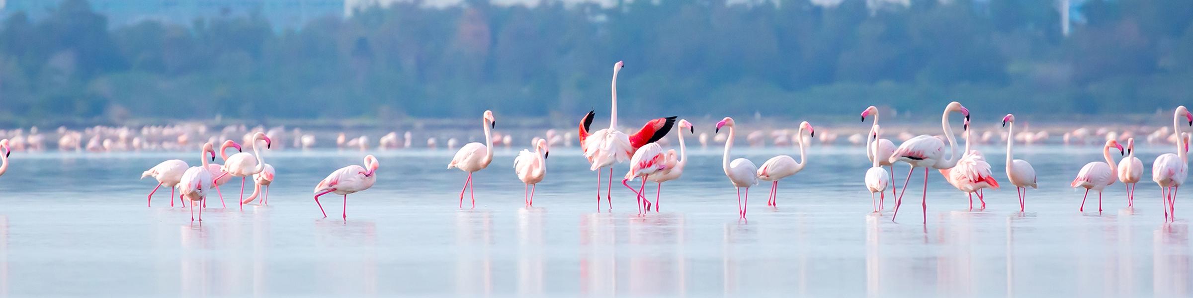 Cyprus Larnaca Salt Lake