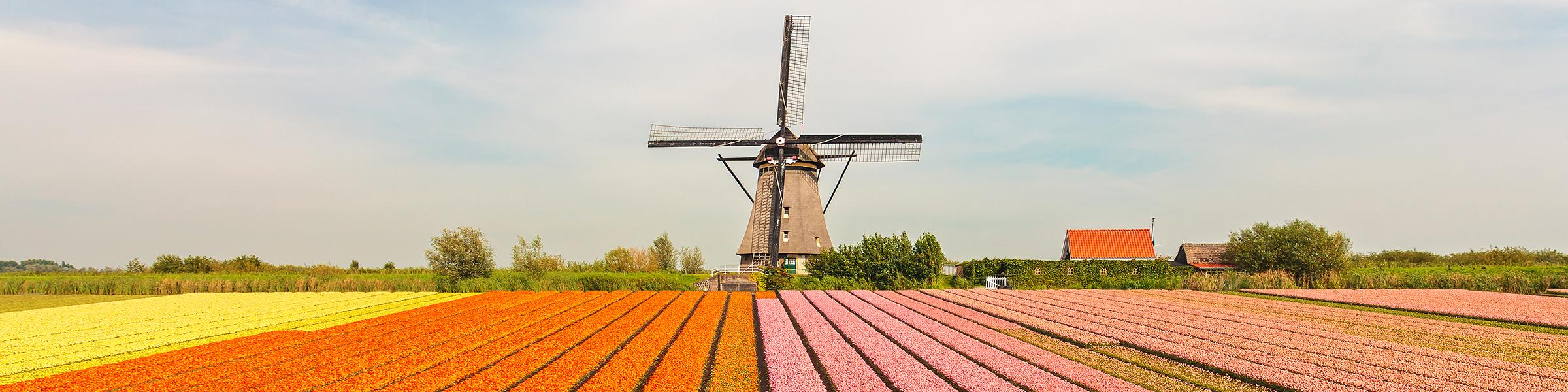 Netherlands Tulip Fileld