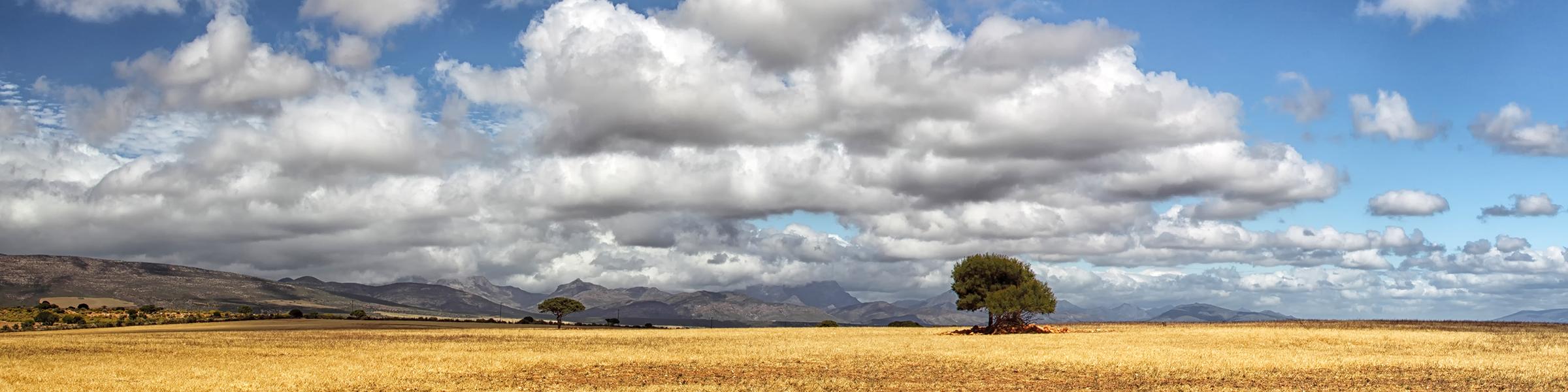 South Africa Karoo Semidesert