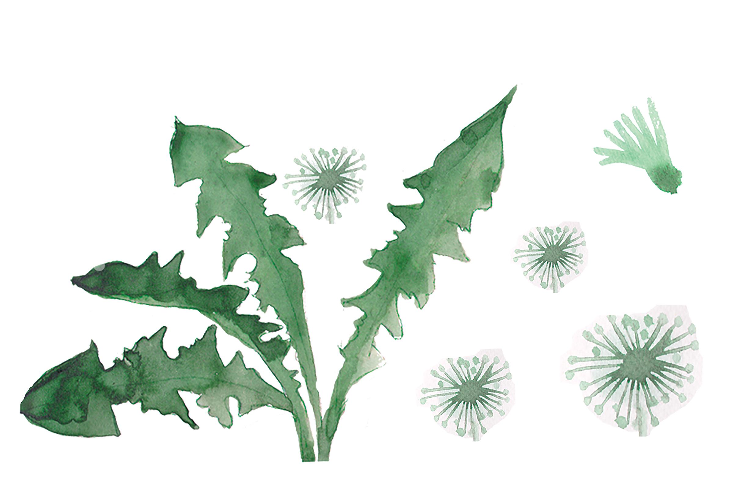 Dandelion leaves painting