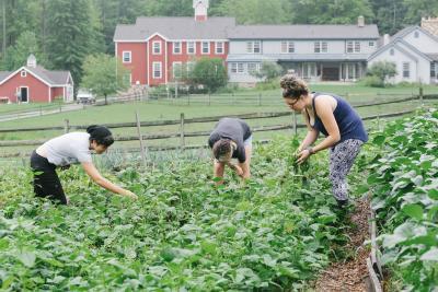 Adolescent students gardening